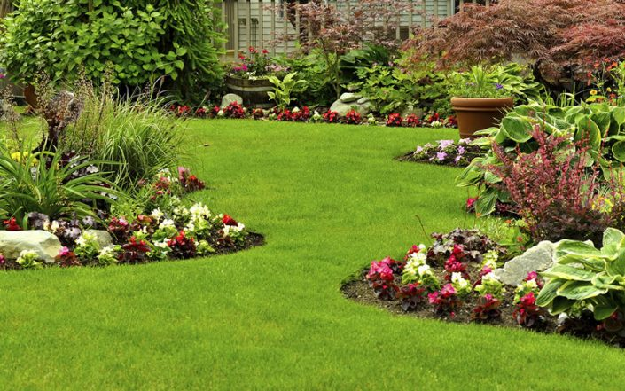 Harrogate Garden Maintenance